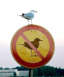 no-birds